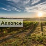 Sommerferie 2019: Feriebolig i Toscana